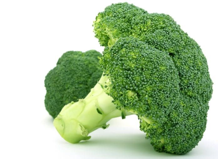 Can dogs eat broccoli? Broccoli showing in image