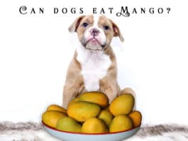 Can dogs eat mango?Dog with mango