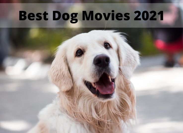 Best Dog Movies 2021