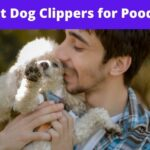 Best Dog Clippers for Poodle