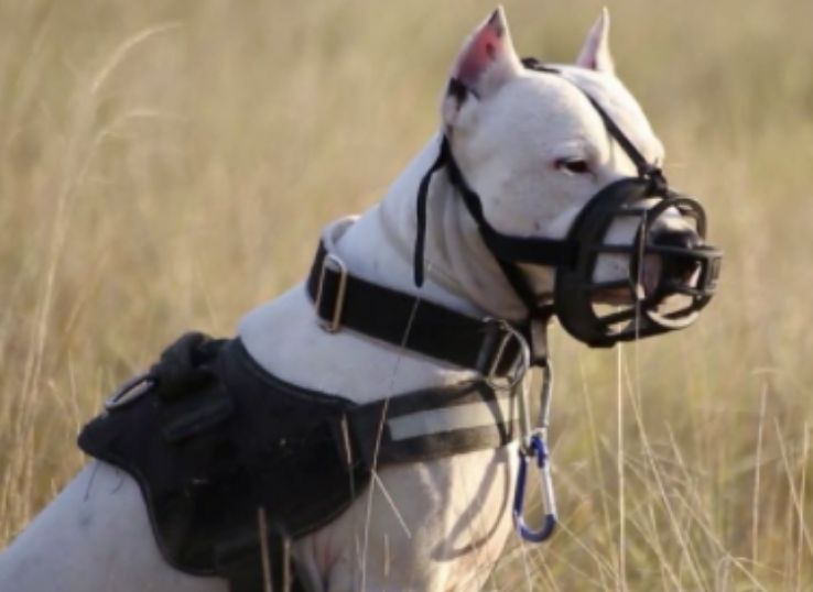 how to measure dog muzzle