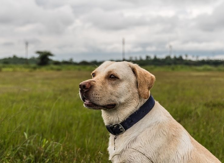 How to clean a dog collar