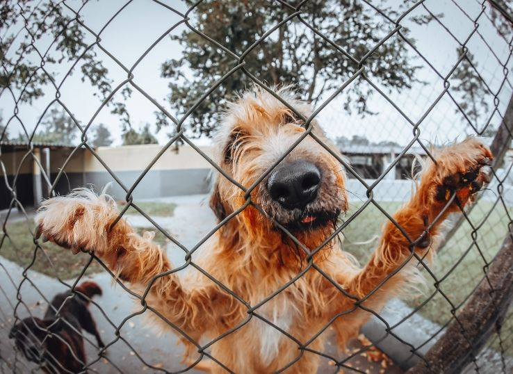 How to keep the dog away from jumping the fence