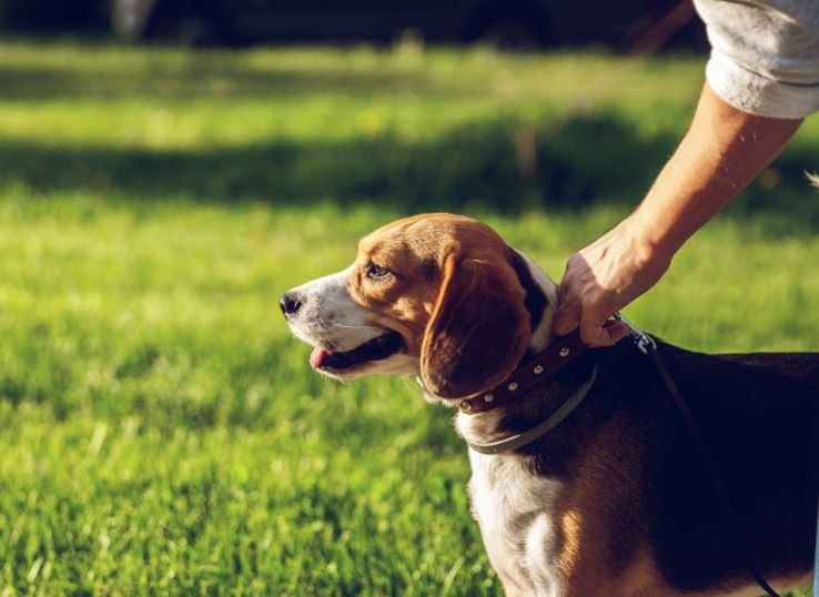 How to stop a dog from pulling on a leash